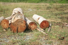Wood log on the ground Royalty Free Stock Photography