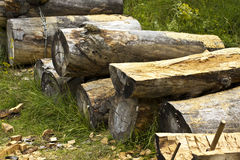Wood log Stock Photos