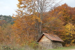 Wood log. The house is made of wood in autumn.Wood log in Serbian village royalty free stock photos