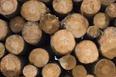 Wood log pile background for lumber industry royalty free stock photography