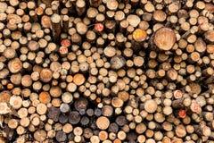 Wood log pile. Royalty Free Stock Photos