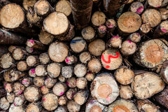 Wood log pile. Stock Photos