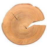 Wood log slice Royalty Free Stock Photos