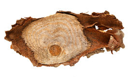 Wood log slice cutted tree trunk isolated on white, top view. Royalty Free Stock Photo
