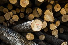 Wood log with sunshine. Close look of Wood log with sunshine in wood factory Stock Image