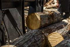 Wood log with sunshine Royalty Free Stock Images