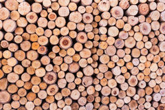 Wood log texture background Royalty Free Stock Images
