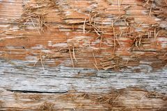 Wood log texture detail frayed. Close-up detailed view of worn wood texture with frayed edges orange and gray royalty free stock photo