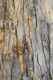 Wood log texture. Old brown wood log texture Royalty Free Stock Photography