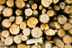 Wood log texture Royalty Free Stock Photography