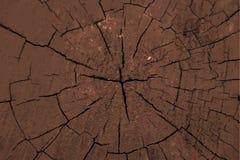 Wood log texture. Stock Image