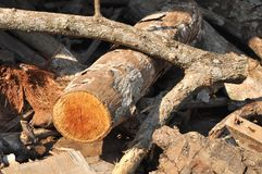 Wood Log Timber Stick Royalty Free Stock Image