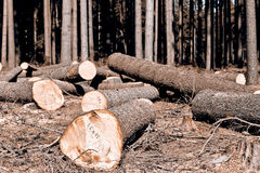 Wood logging Royalty Free Stock Photo
