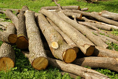 Wood logging logs. Oak wood, wooden logs or logging, natural material or product Stock Image