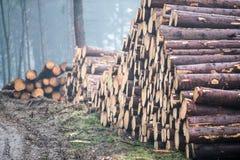 Wood, Logging, Lumber, Tree royalty free stock images