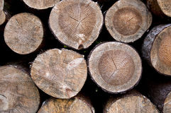 Wood logs Stock Image