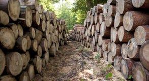 Wood logs Royalty Free Stock Photos