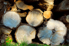 Wood logs Stock Images
