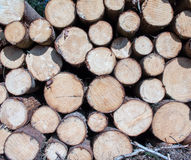 Wood logs background Royalty Free Stock Photography