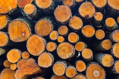 Wood logs  background Stock Images
