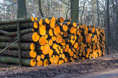 Wood logs  background Stock Image