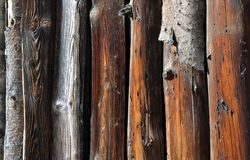 Old tree logs Royalty Free Stock Photography