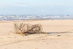 Wood logs beach sea shore bush branch pollution dirt, ocean wav royalty free stock photos