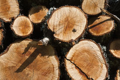 Wood logs with a bee royalty free stock photography