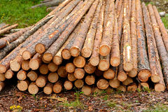 Wood logs Royalty Free Stock Images