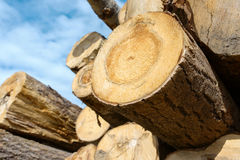 Wood logs on blue sky. Background Royalty Free Stock Image