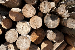Wood logs cut background Royalty Free Stock Photography
