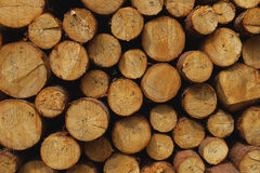 Wood logs. Wood logs in the forest in Giant Mountains Royalty Free Stock Photography