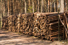 Wood logs. In the forest in sunny day Stock Images