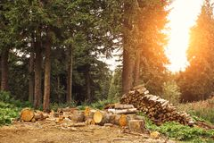 Wood logs in the forest. Carpathian mountains stock photos