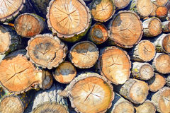 Wood logs for industry Royalty Free Stock Image