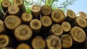Wood Logs In Large Woodpile Against Blue Sky. Big pine wood logs laying on a large woodpile in the forest Royalty Free Stock Photos