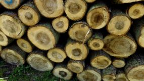 Wood Logs In Large Woodpile Against Green Grass. Big pine wood logs laying on a large woodpile in the forest Stock Image