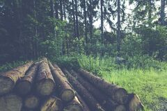 Wood Logs Near Trees Stock Images