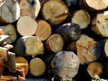 Wood logs. A pile of wood logs harvested from the forest Royalty Free Stock Image