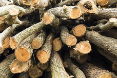 Wood logs pile Stock Photos