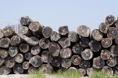 Wood logs pile stock images