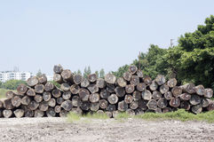 Wood logs pile Royalty Free Stock Photos