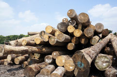 Wood logs pile royalty free stock images