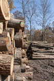 Wood logs piled at an Amish sawmill Royalty Free Stock Photo