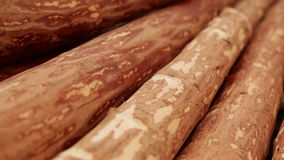 Wood logs Plant stock video footage