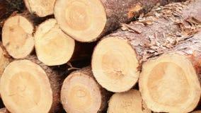 Wood logs Plant stock video