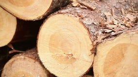 Wood logs Plant stock footage