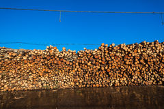 Wood Logs Pulping Paper Royalty Free Stock Photos