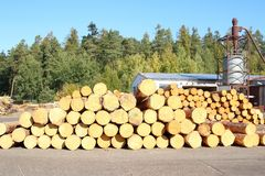Wood Logs at Sawmill, Jevany, Czech Republic stock photography