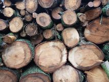 Wood Logs in Summer outside of home stock photography